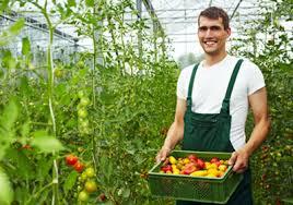 الزراعة النظيفة والعودة للطبيعة